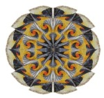 Ruth 5-24 spiral RM symmetry 1
